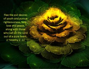 2 Timothy 2  22